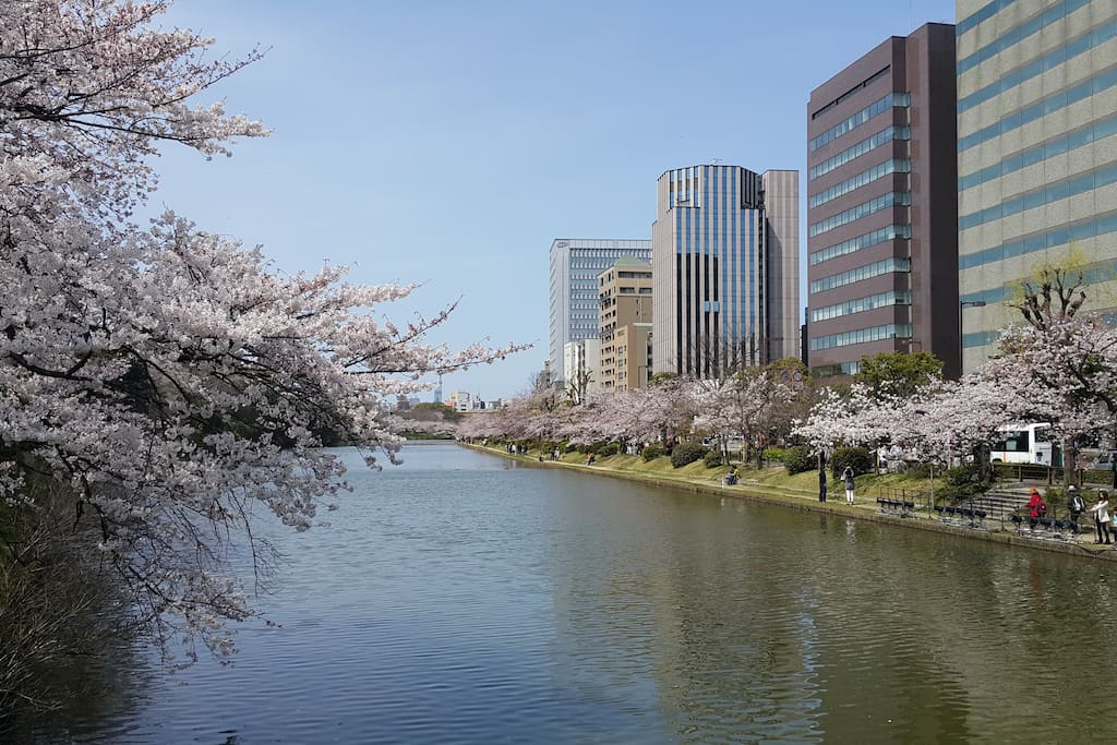 Another photo I took at Ohori Park, at the back of my apartment.