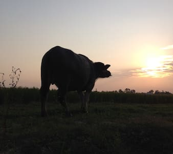 My family Farm peaceful