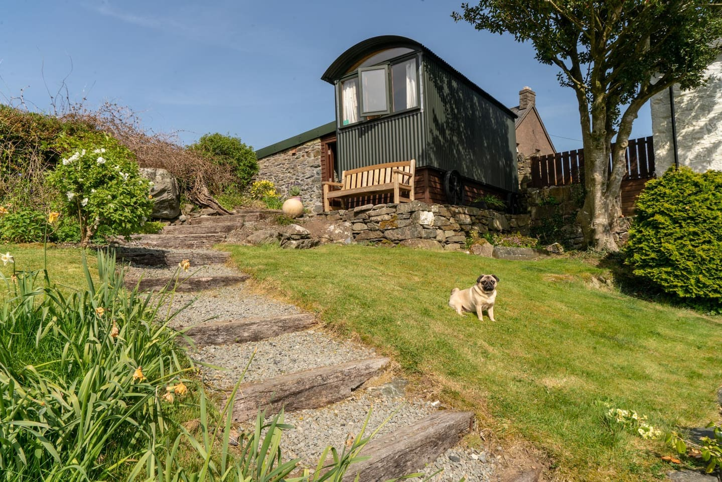 Glyn Shepherds Hut complete with an occasional visit from Sybil the friendly pug!