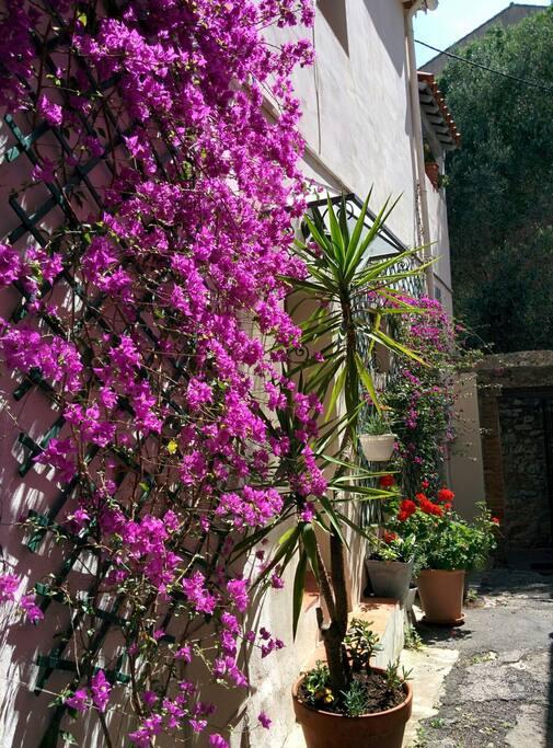 La maison dans son ilot de verdure - House in its blooming area
