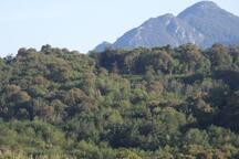 vue sur paysage verdoyant et montagne corse