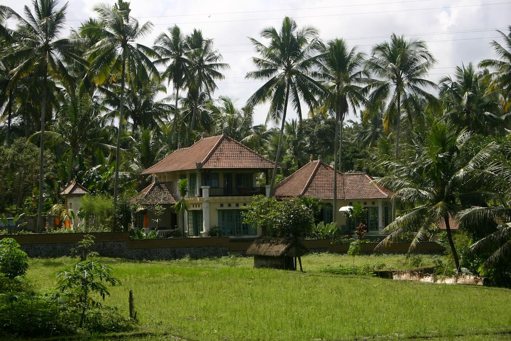 Villa Uma Anyar from rice field