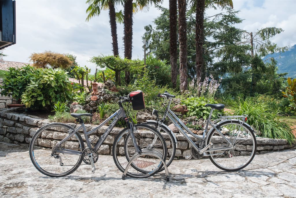 free bicycles for every guests