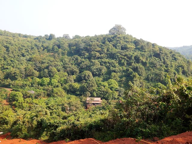 Nature and bird lovers' Paradise - Jungle Homestay