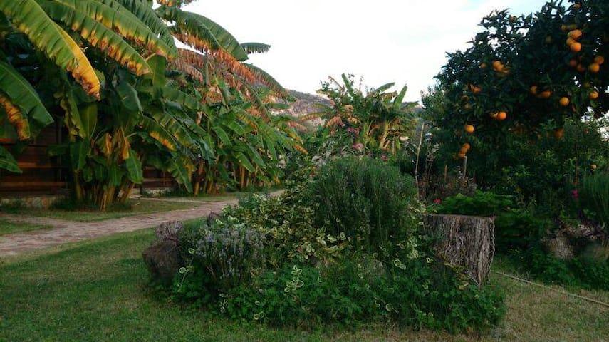 Vila druri Dhermi - Himarë - Bungalow