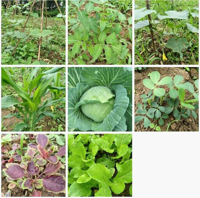 自家绿色菜地,可自体验