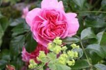 Roses :)