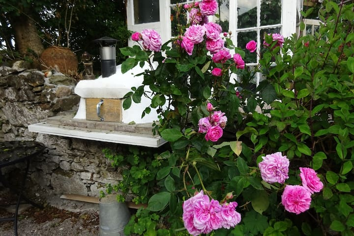 Roses and our new wood fired pizza oven
