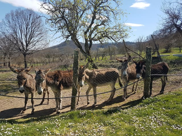 Nella Valle di Civita di Bagnoregio
