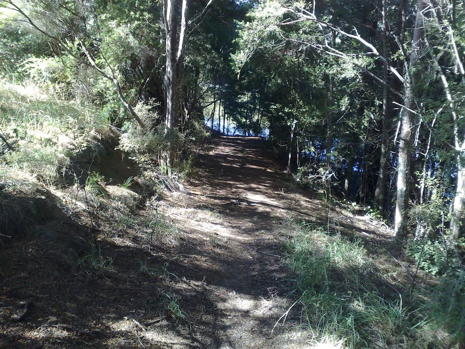 Track through the bush leading to the jetty.