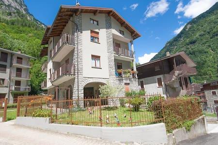 Stella Alpina (Edelweiss) - San Martino - Apartment