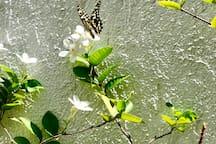 Nature-friendly environment