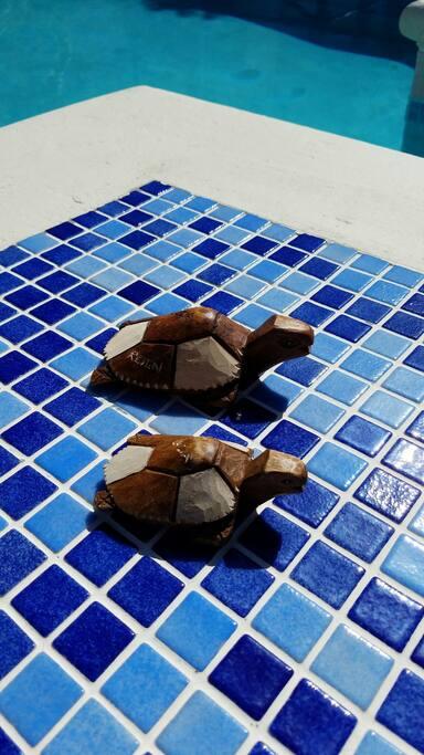 Villa Reign Turtles enjoying the Pool