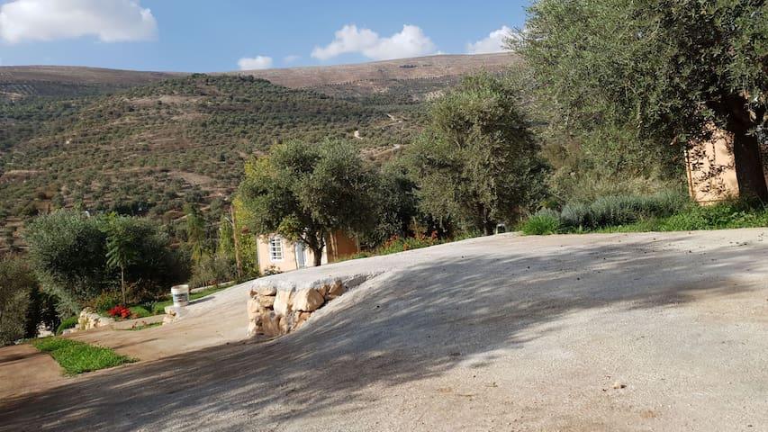 Hasbaya Guest House #4
