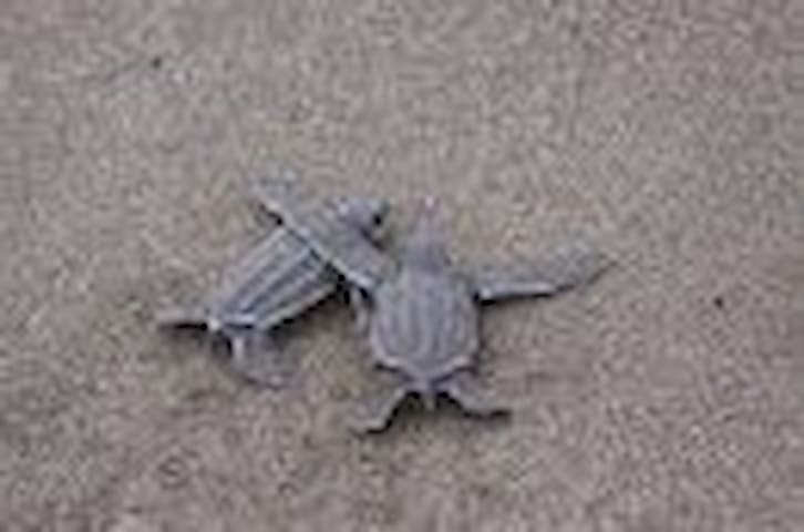Home stay on  turtle nesting beach