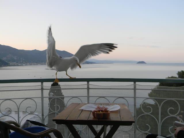 bilocale vista mare Laigueglia con garage - Laigueglia - Lejlighed