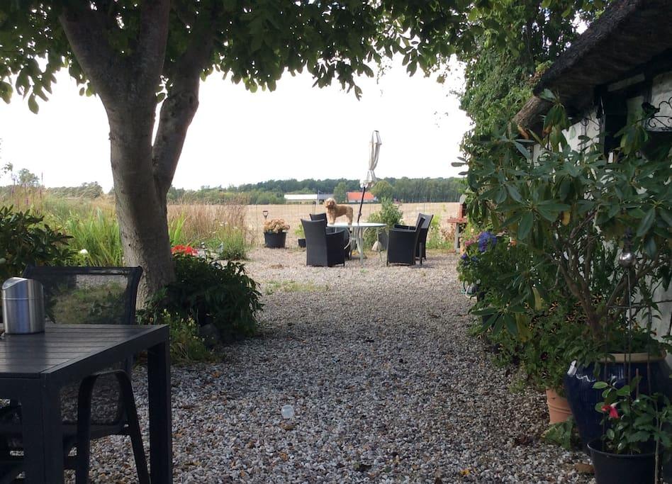 Gårdhave med grill