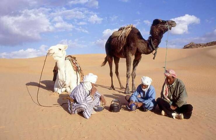 Amaar sahara camel tours