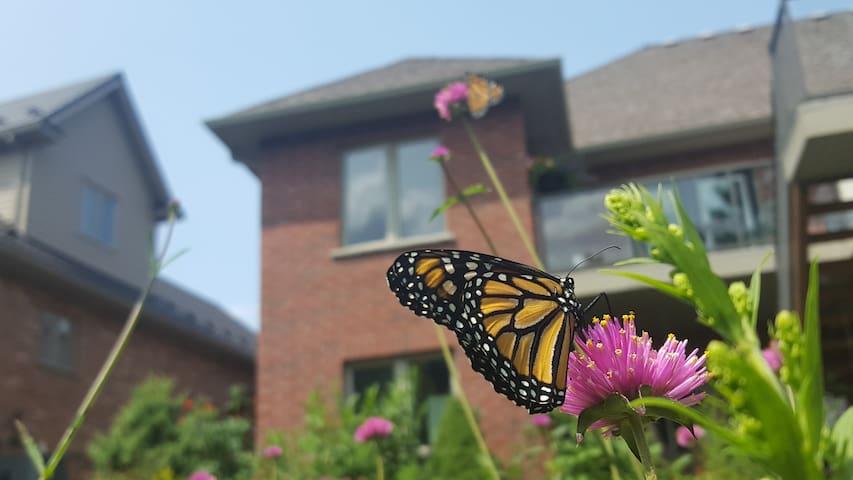 Butterfly B&B @Monarchs On Avon