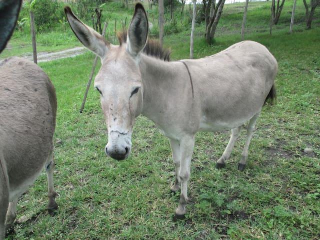 Donkey's Dormitory - $50/ person/ week (best deal) - Vilcabamba - Dorm