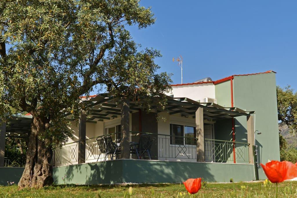 Το σπίτι βρισκεται μέσα στο κτήμα και στα ελαιόδεντρα. Η κατασκευή του ολοκληρώθηκε τον Μάϊο του 2018.