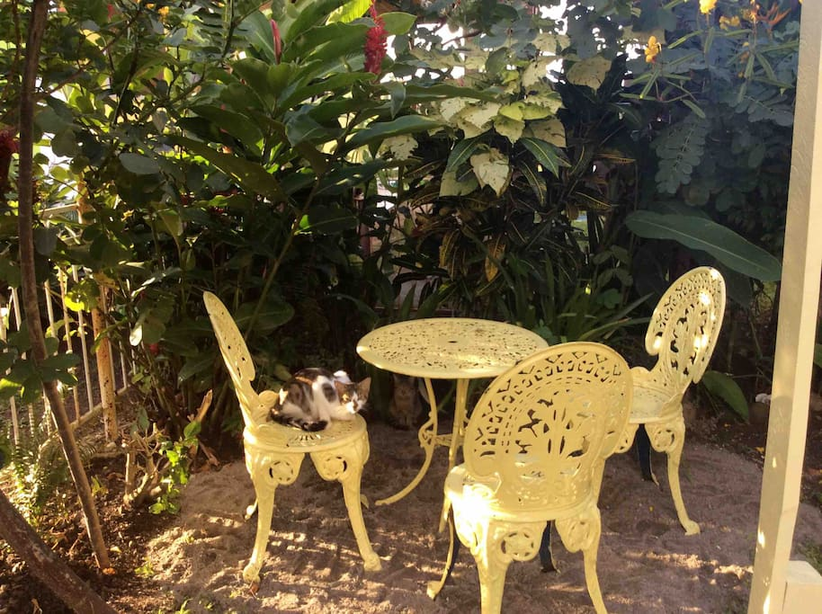 Private garden with Pincho the cat