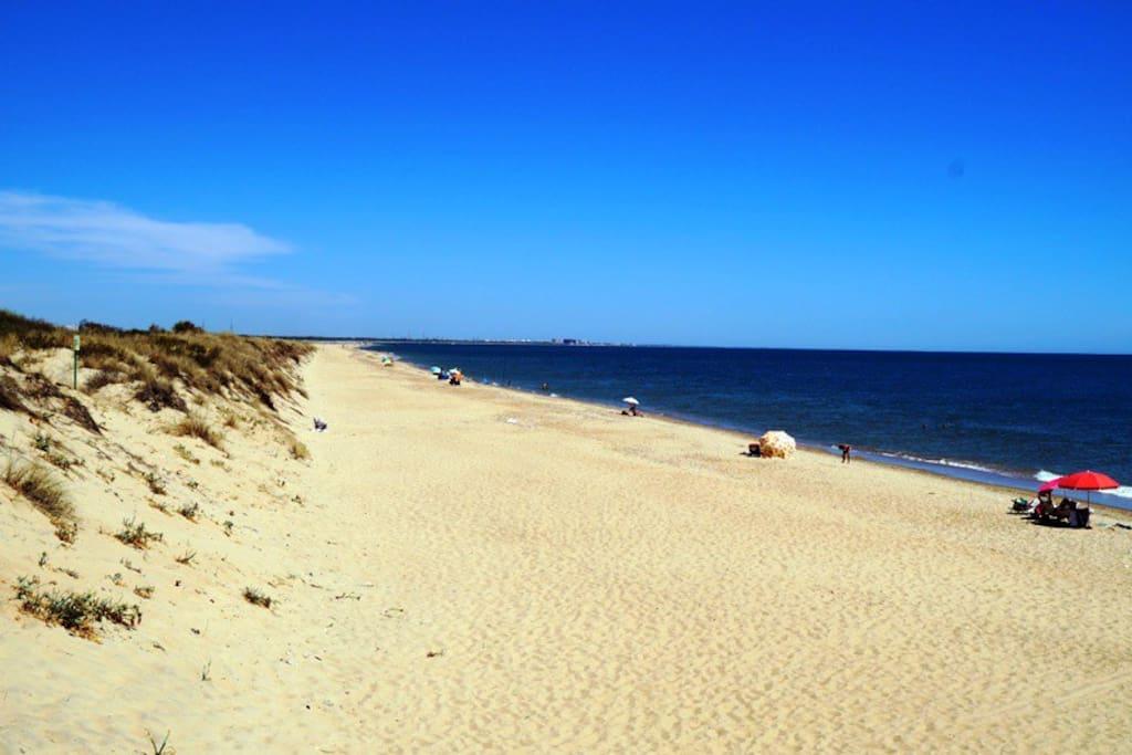 PLAYA.  Vista de Playa La Flecha de El Rompido; mar abierto