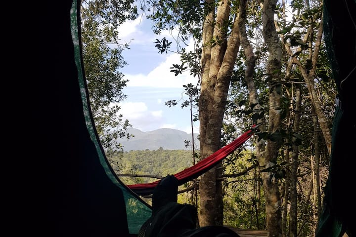 African Rain Forest Experience 4 Glamping + Cabin
