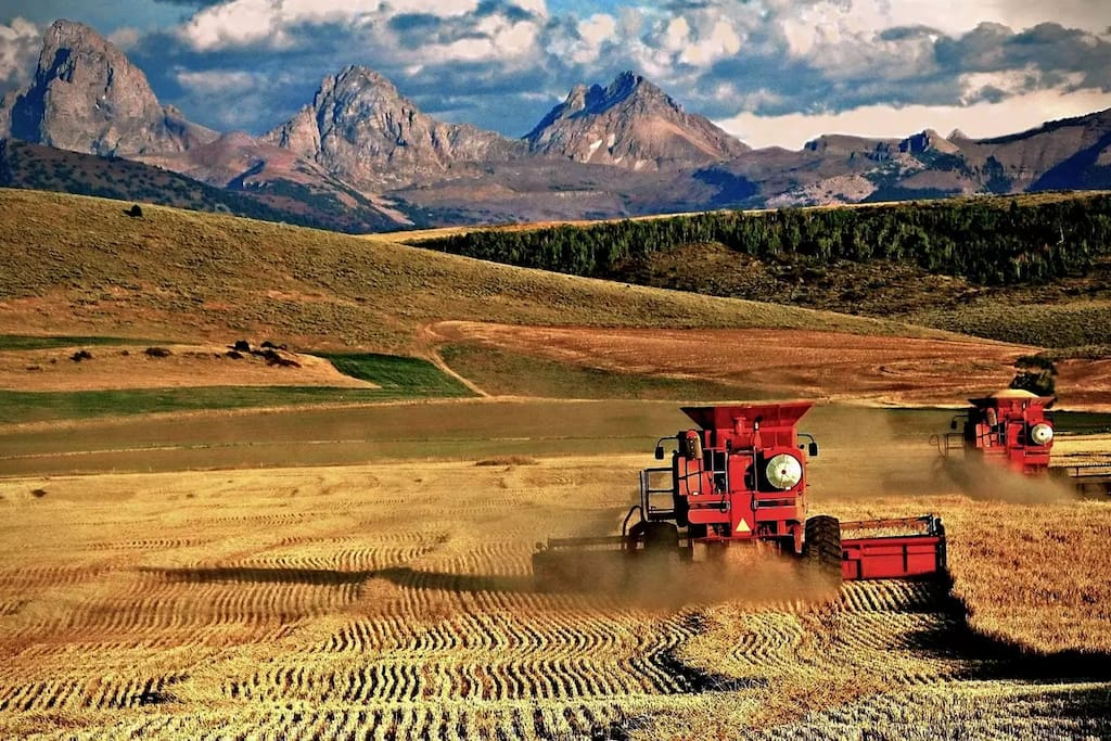 The Tetons during harvest