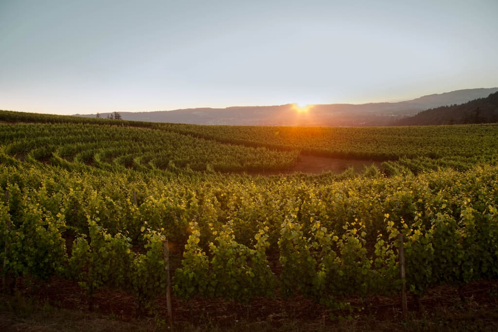 stunning views of the vineyards