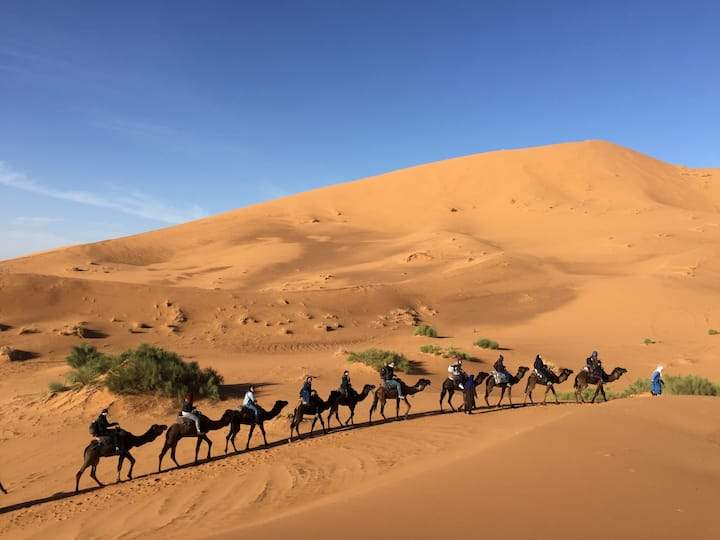 Morocco Desert tours and camel treks experience.