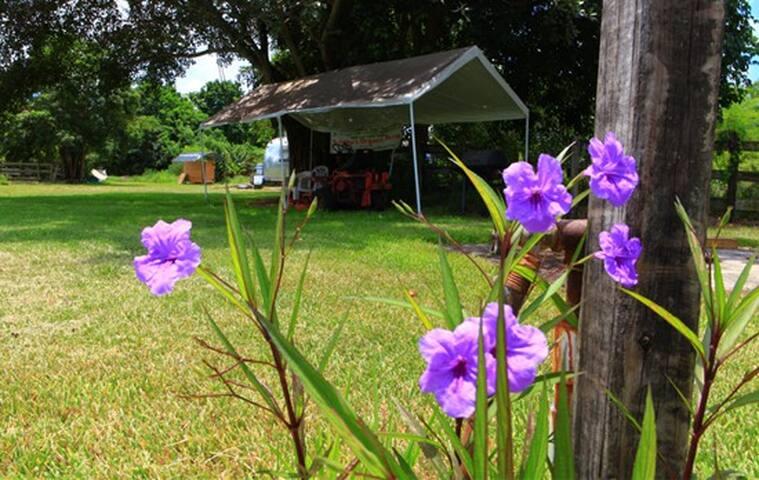 Farm Retreat/Near Sawgrass Mills, Davie FL - Davie - Cabin