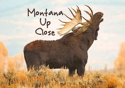 Montana Up Close Log Cabin (Moose Suite)