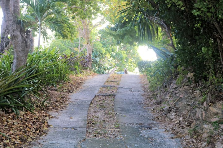 This is how our driveway looks as you enter our property.  Lush and alive!  We love Antigua especially during the wet season when everything is so green.