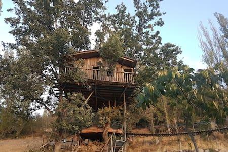 Casita del arbol - Hervás - Cabana en un arbre