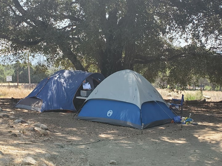 6 Person Tent with Males or Females Tent Hostel.