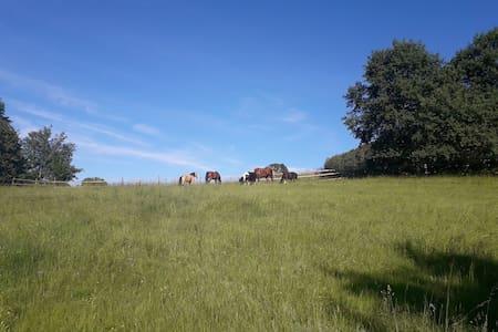 Urlaub am Pferdehof Laas
