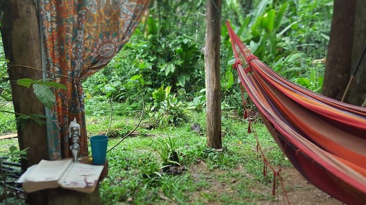 hammock in jungle paradise