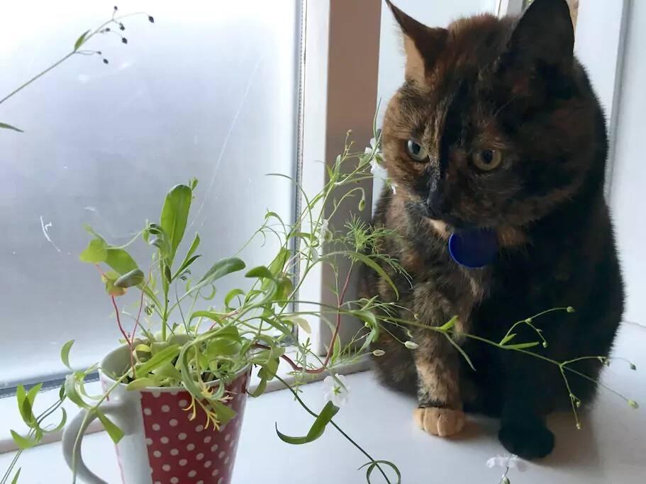Meet Freyja, the friendliest cat I know