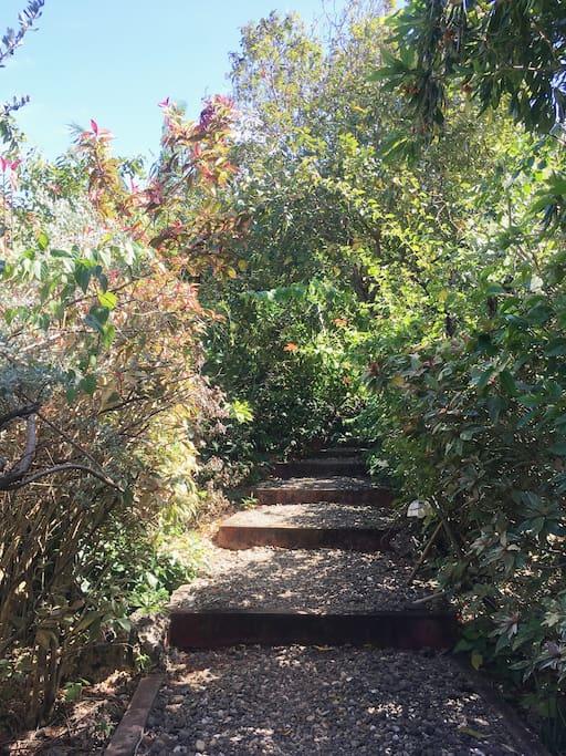 Path way towards the house