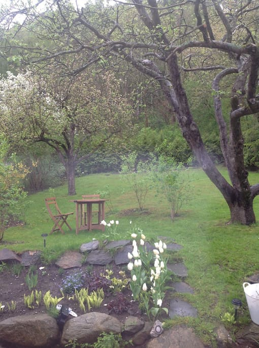 Trädgård baksida huset