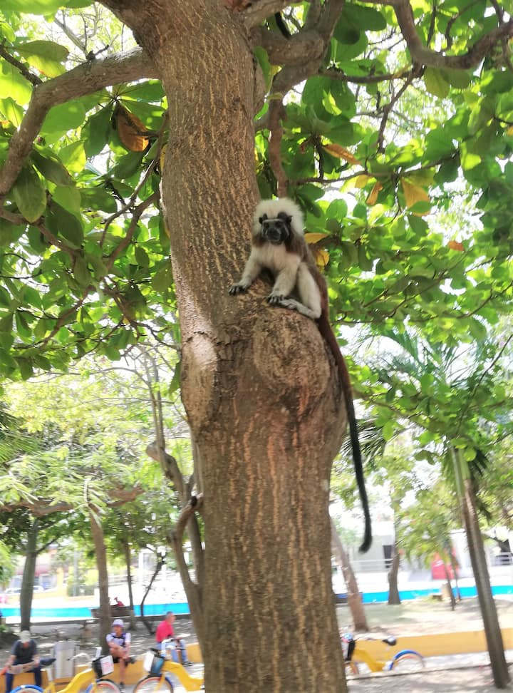 One of the world's smallest monkeys!