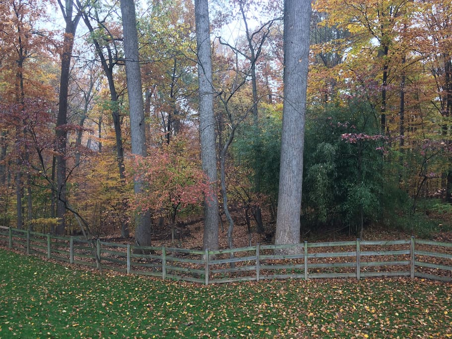 Very serene back yard. This one obviously taken in the fall.