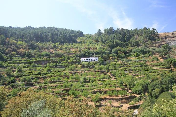 Secret terraced garden in the lower Douro