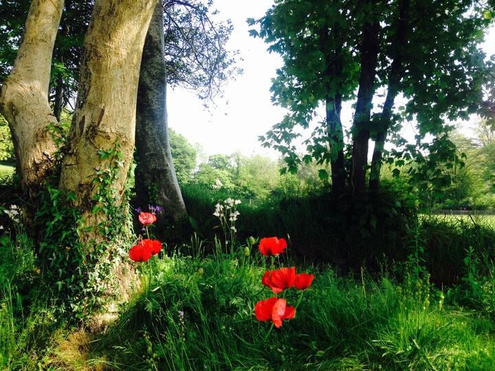 Llwyn-Rhydowen fields - a little piece of Heaven