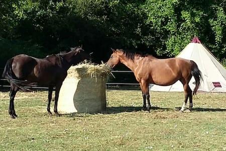 Tipi à côté des chevaux - Feugarolles