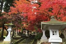 Seisuizi Temple Autumn leaves 清水寺の紅葉 11月