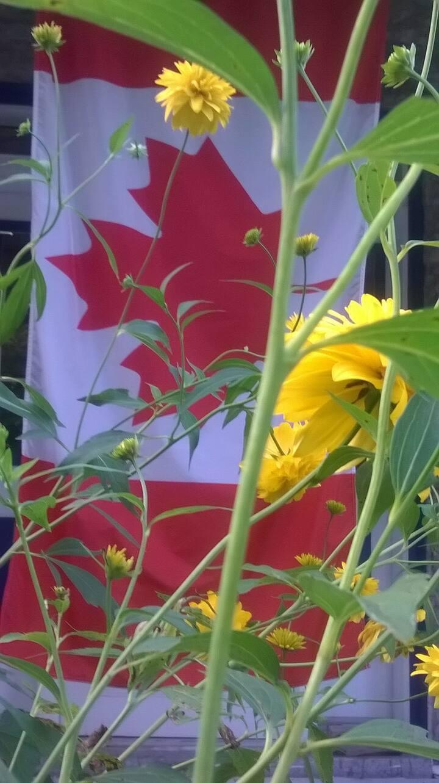 Springfield Farm's Canadian Flag
