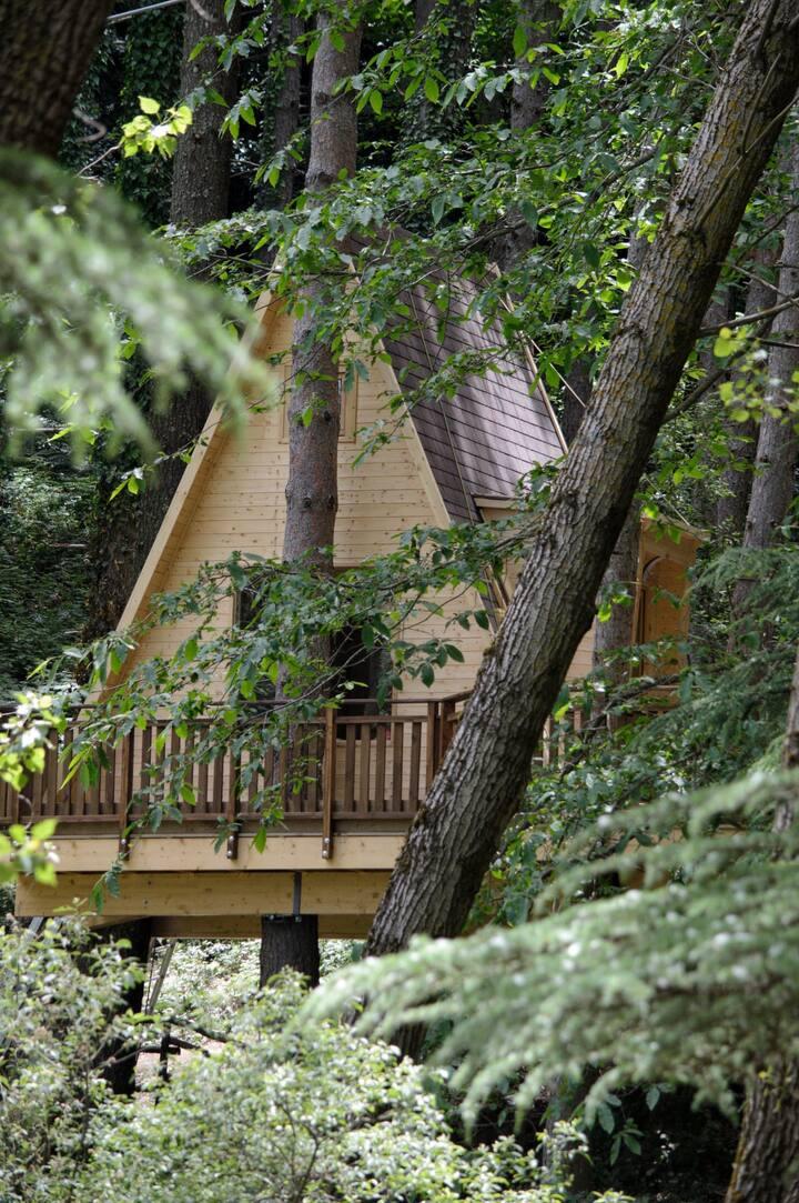 """Casa sull'albero """"La Terrazza sul Lago"""""""