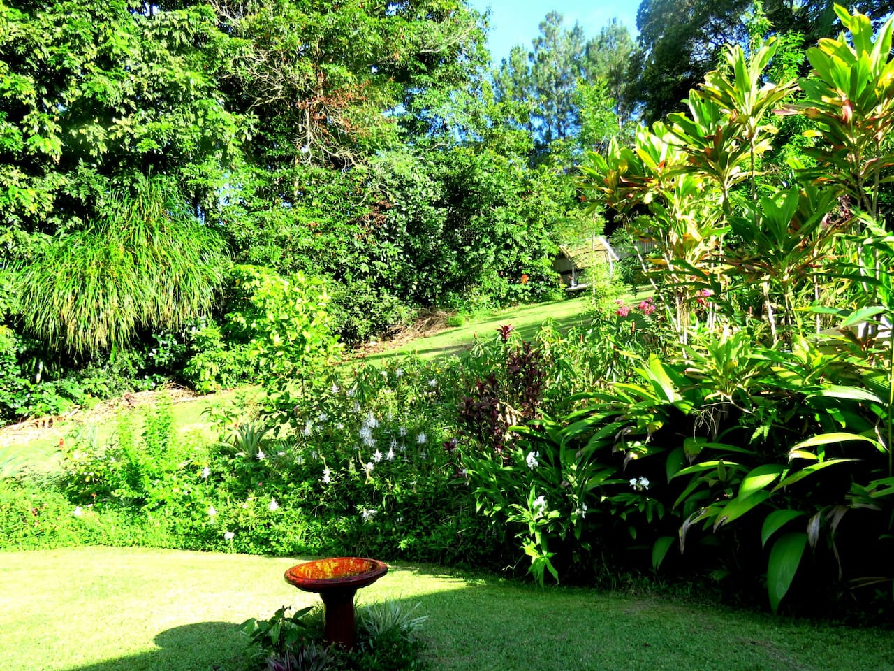 The view of the garden from your room